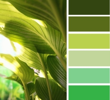 green657plants